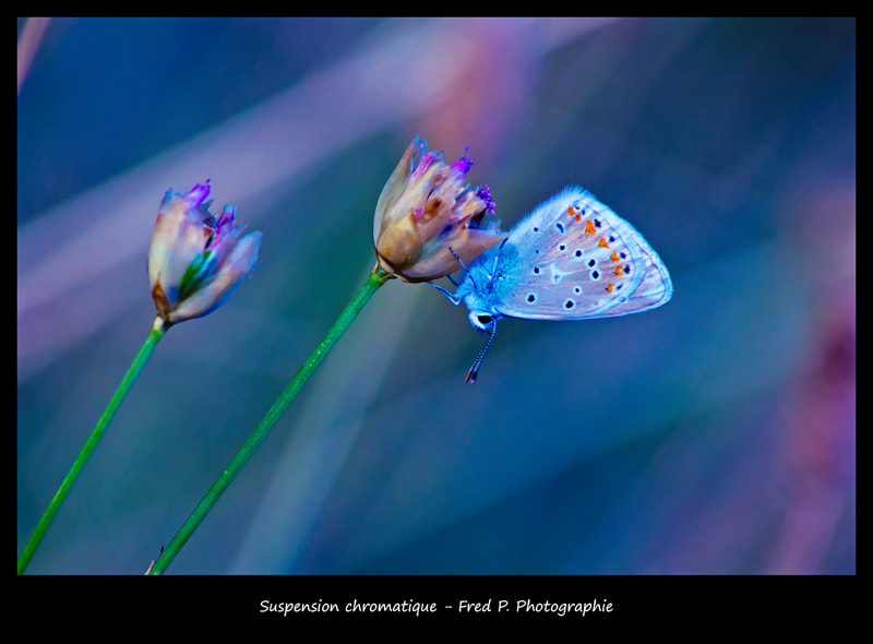 Photograph Suspension chromatique by Fred Picard on 500px