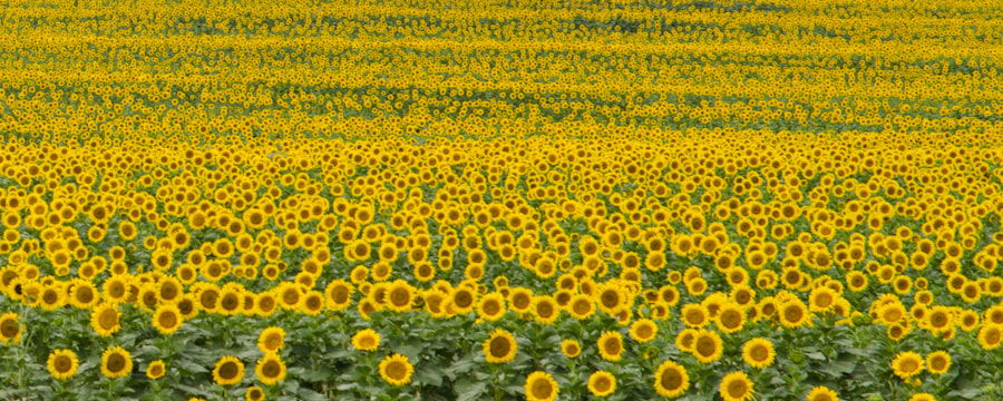 Photograph Yellow by Linda Trine on 500px