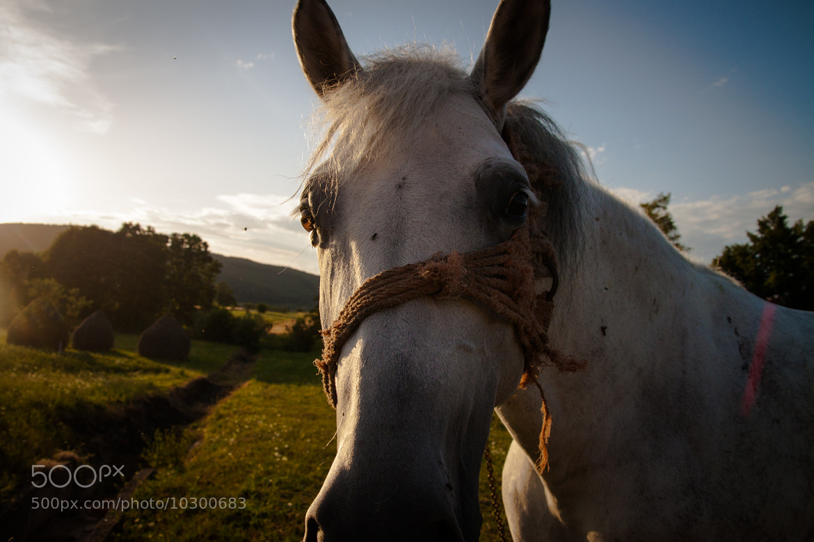 Photograph A portrait of a horse by Tiberiu Ichim on 500px
