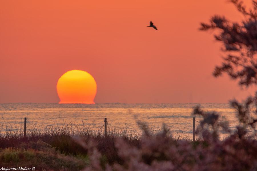 Hoy el sol en omega al amanecer by Álex Muñoz i Garcia on 500px.com
