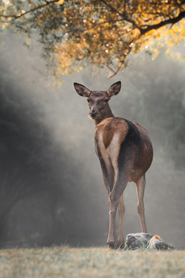 Sguardi  by marco vancini on 500px.com