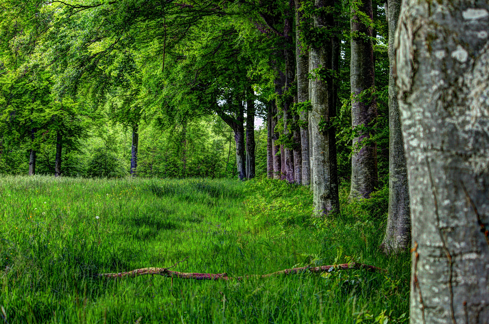 Photograph Seedorf-Forest by Stephan Scherz on 500px