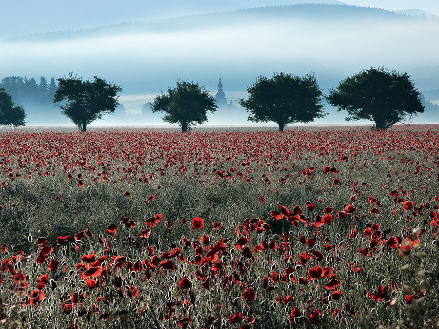 Photograph At the poppy field by Zdeno Kostka on 500px