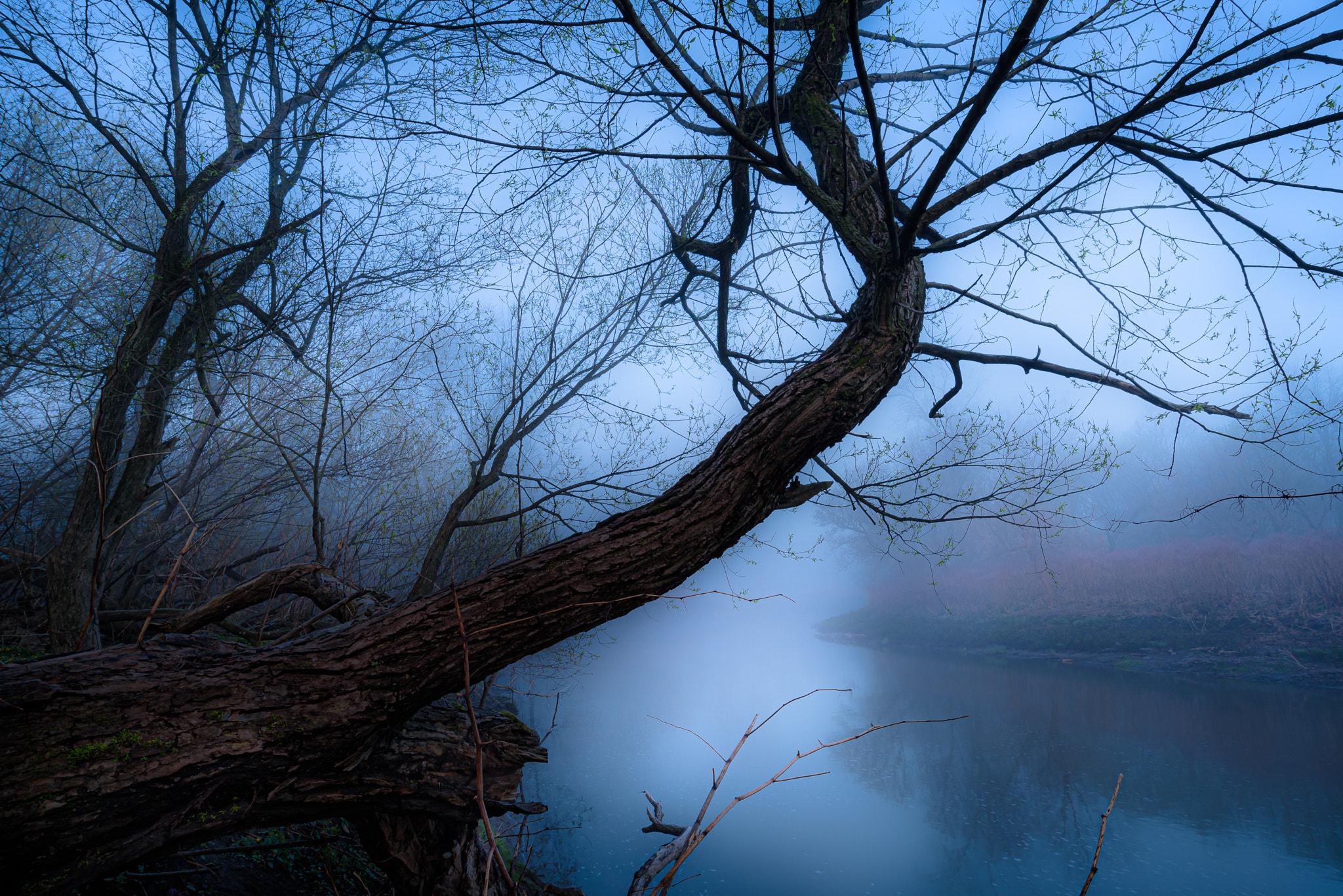 Haunting Morning Fog
