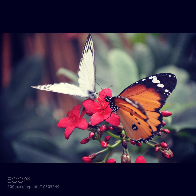 Photograph Butterflies by Jelena Lekic-Filipovic on 500px