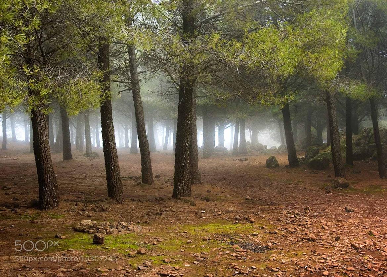 Photograph Mist by alex dawson on 500px