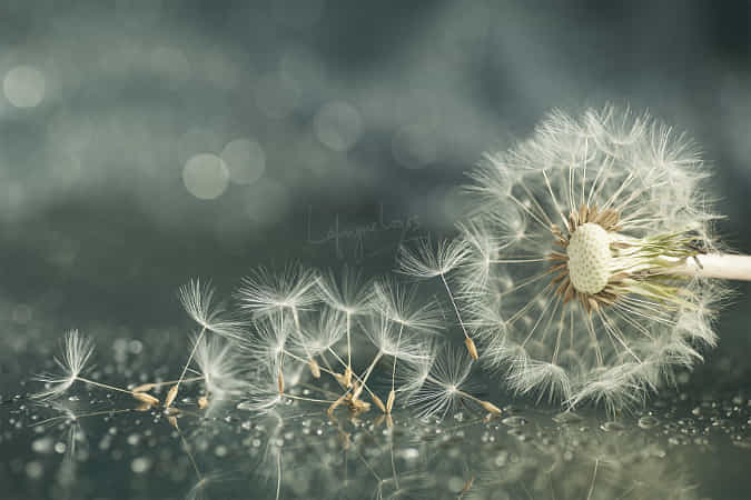 Release from silence by Lafugue Logos