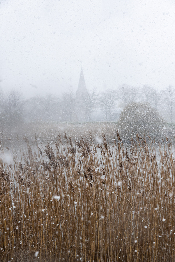 Reeds and village in the snow by Werner Lerooy on 500px.com