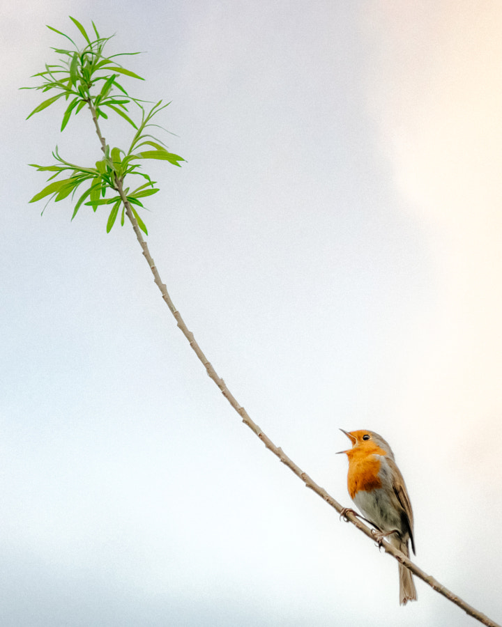 Little robin by Dom Piat on 500px.com