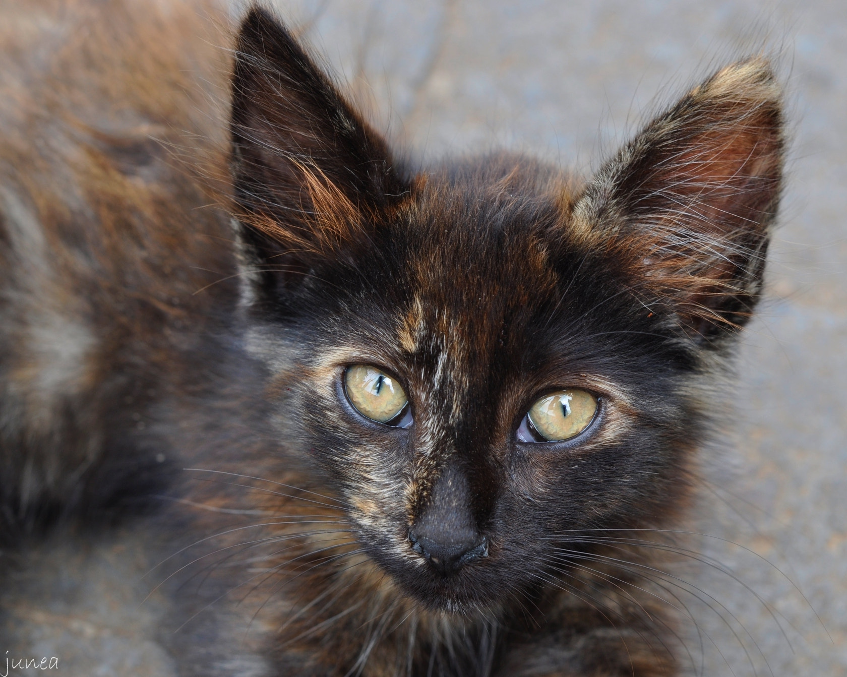 Photograph Kitten in Arucas by June A on 500px