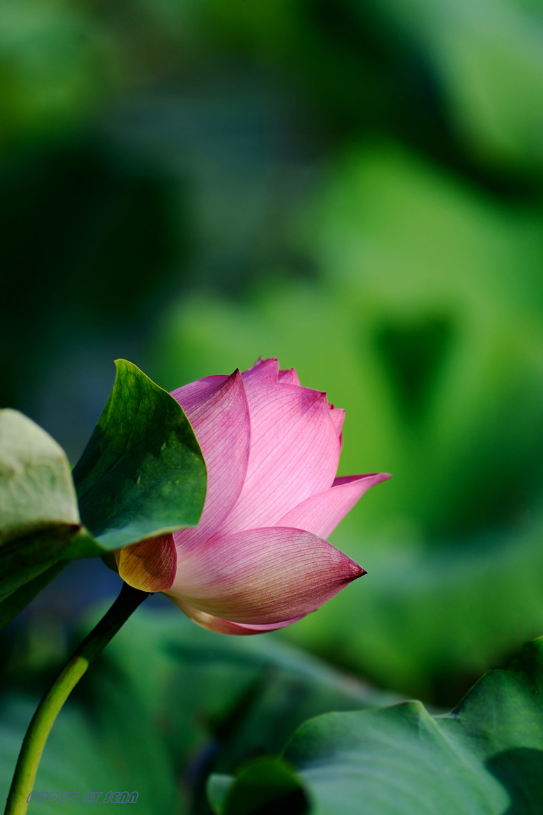 Photograph Untitled by Sean Wu on 500px