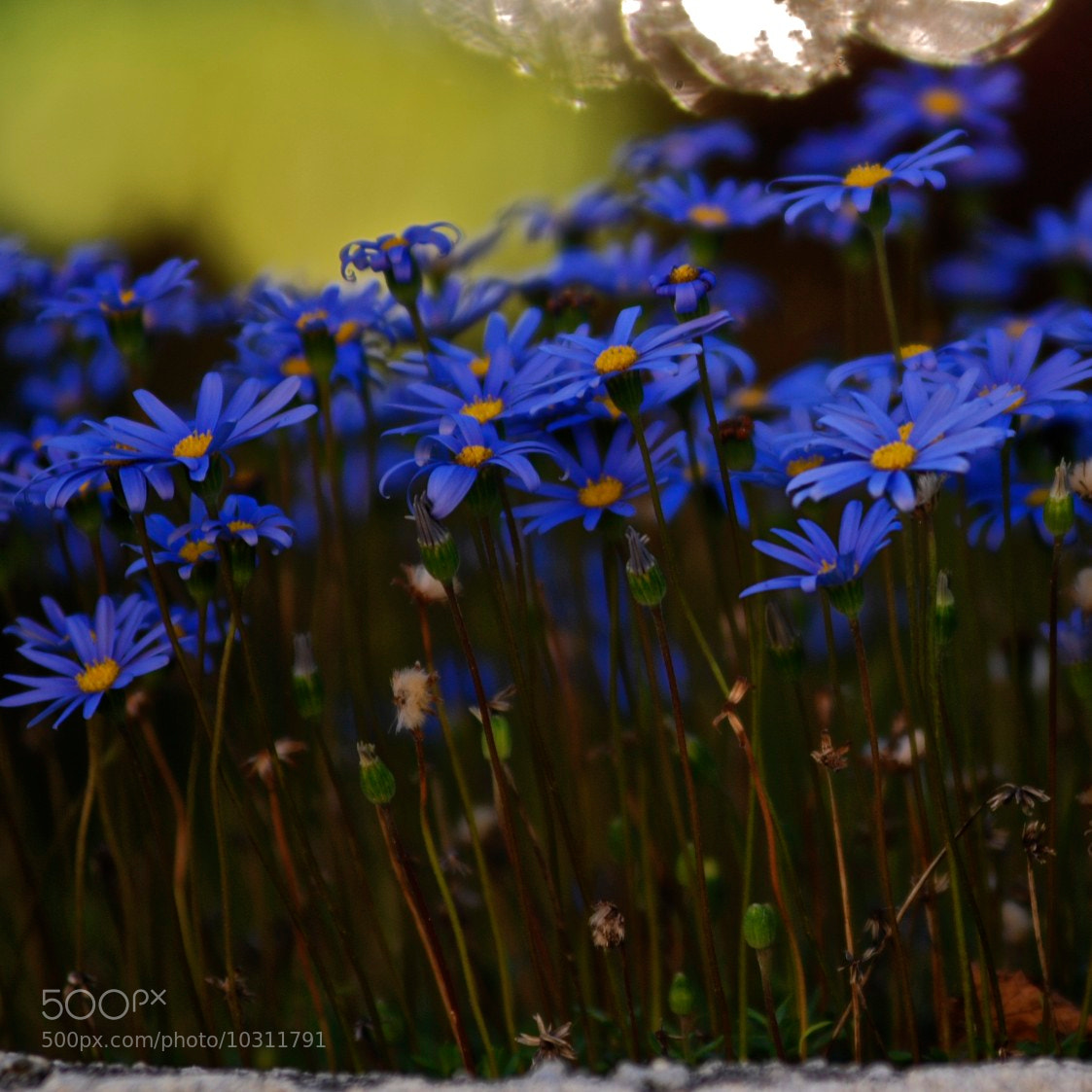 Photograph Blue by Vesna Krnjic on 500px