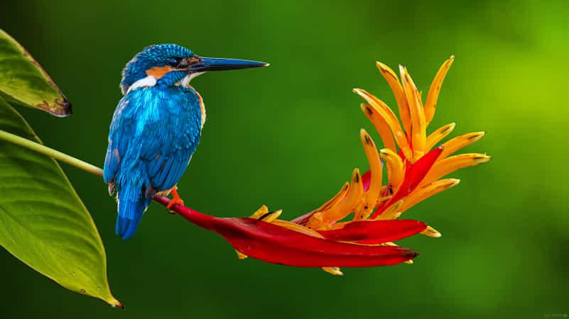 Blue Sapphire ! by Sunil