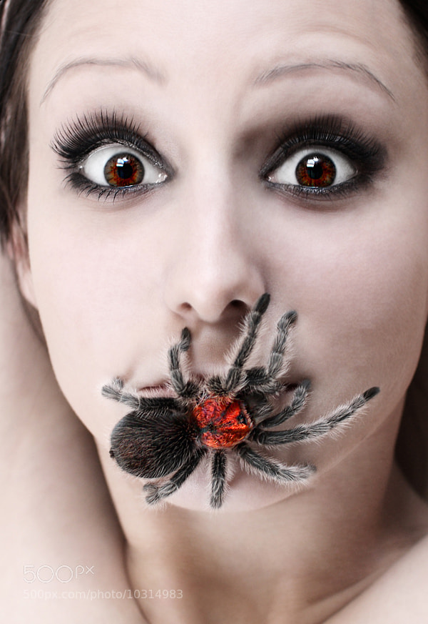 Photograph arachnophobia by W H A L E on 500px