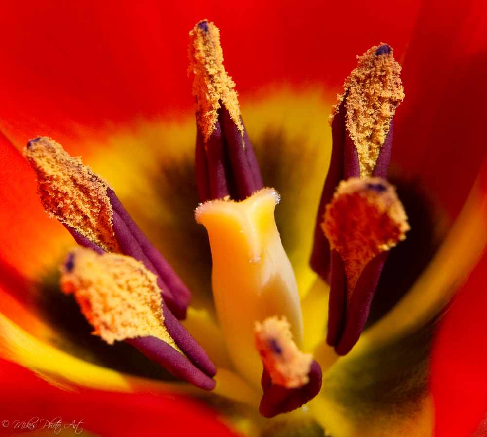 Photograph flower by Michael Suppan on 500px