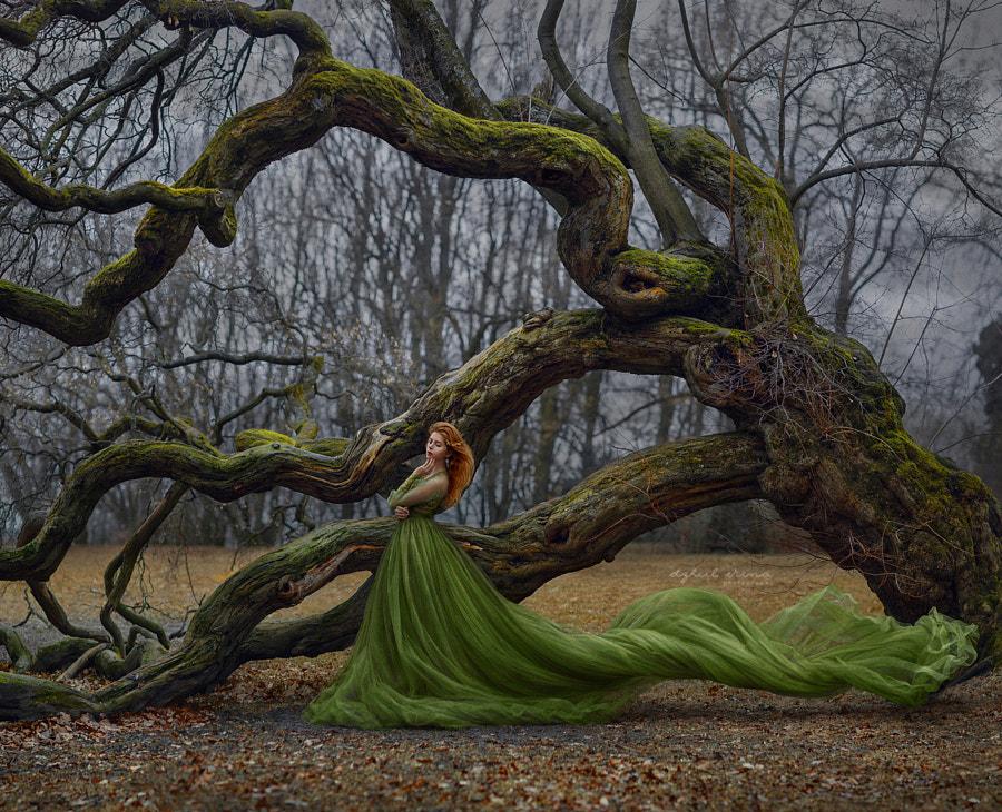 Soul of Tree by Irina Dzhul on 500px.com