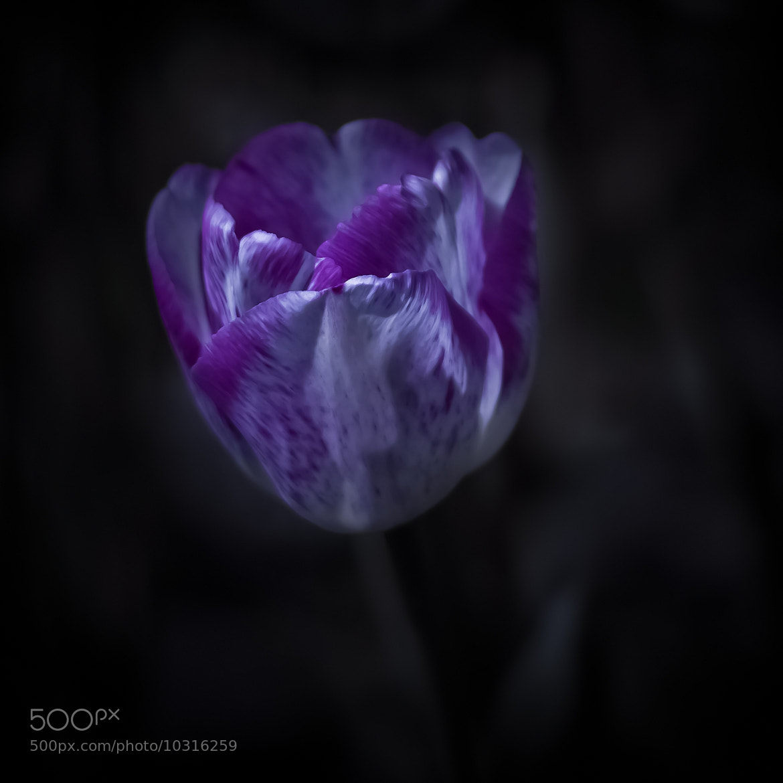 Photograph violet by Adam Sandurski on 500px