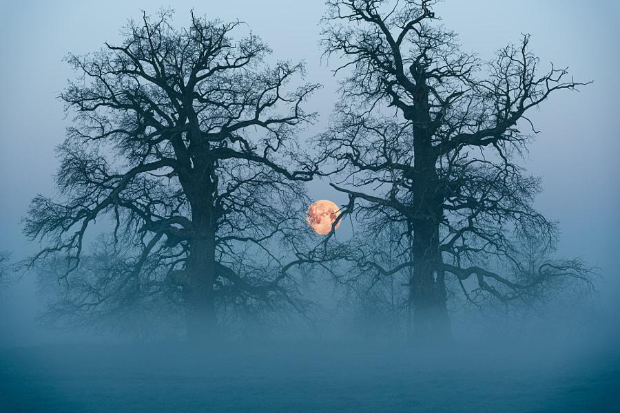 Foggy Moon by Tomek Lacky on 500px.com