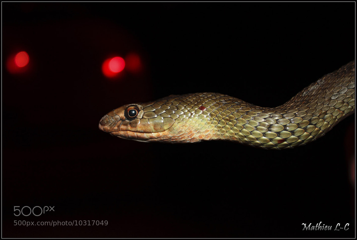Photograph Snake face by Mathieu LC on 500px