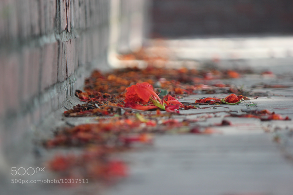 Photograph Fallen... by Ananta Chowdhury on 500px