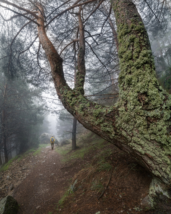 Hiking through the enchanted forest by Jose Miguel Sanchez on 500px.com