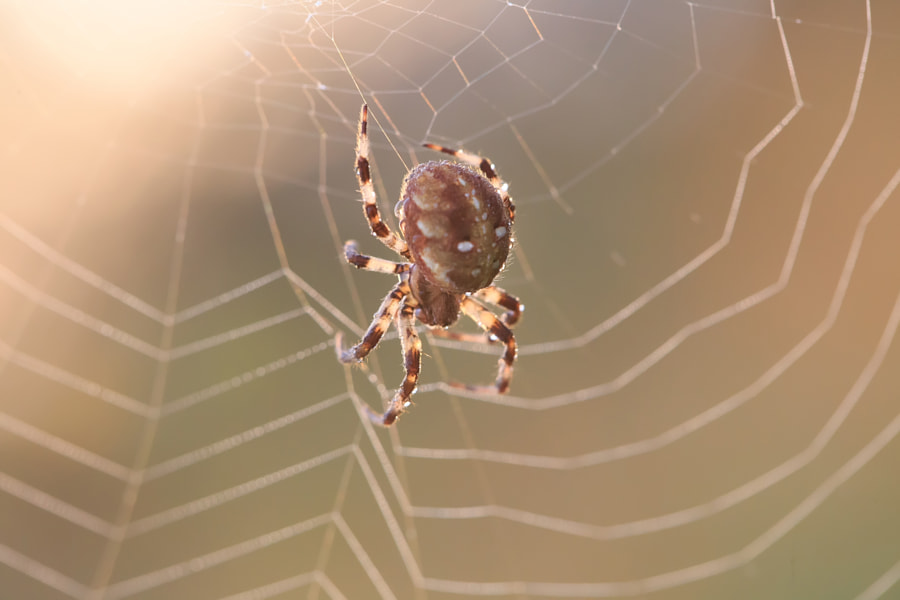 Sunrise. It's a spider. Morning soft light. by Vitaly Stasov on 500px.com