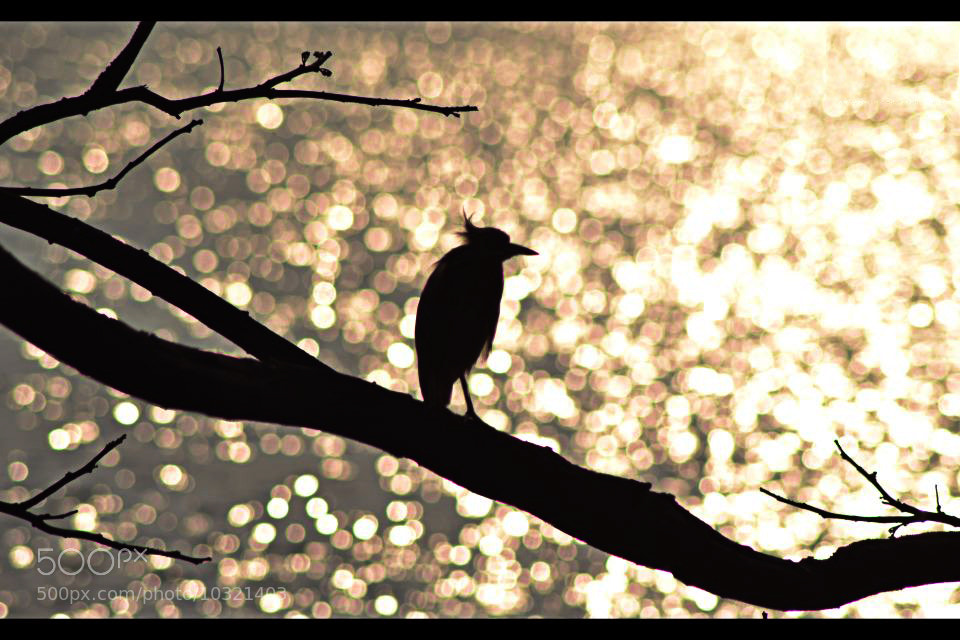 Photograph The sunset bird! by Baiju Abraham on 500px