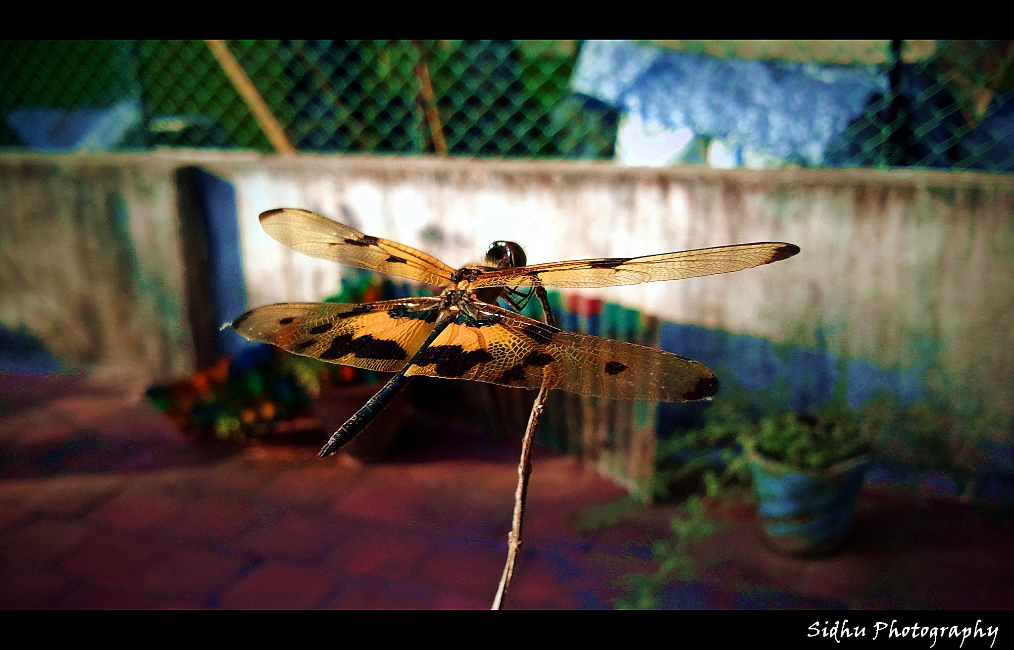 Photograph Dragon Fly by Arun Siddharth on 500px