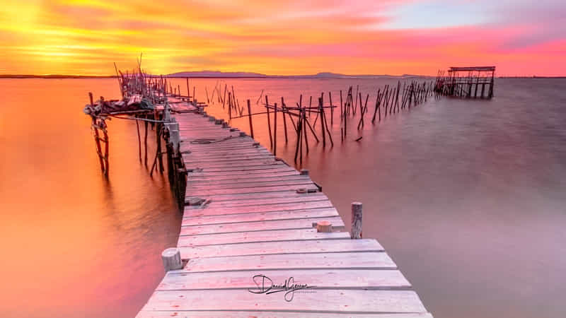 ~~ Carrasqueira II ~~ by David Gomes