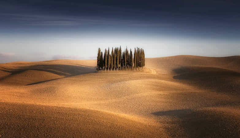 Waves & Trees by Carsten Meyerdierks