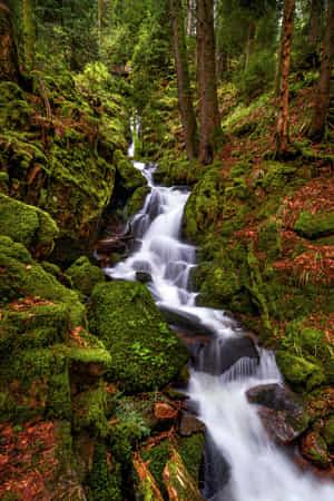 Mossy river in undergrowth by Robert Didierjean