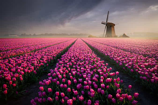 Among the tulips... by Daniel eicha