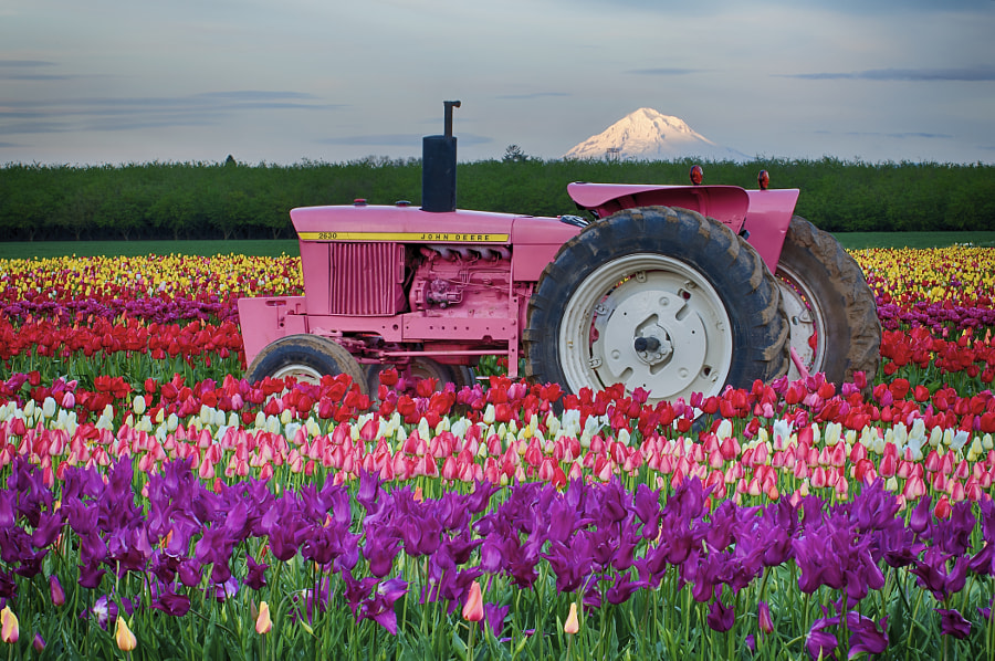 Photograph Pink John Deere by Bruce Lee on 500px