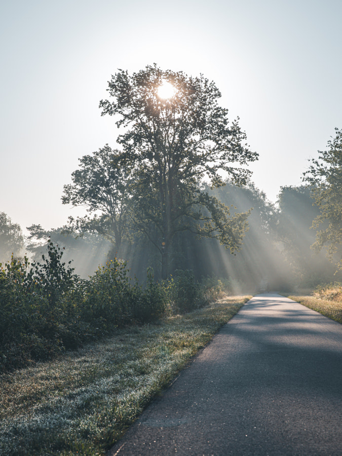 Rise & shine. by Jelle Canipel on 500px.com