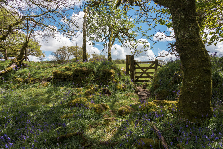 Gate at the edge of the wood by Jean Fry on 500px.com