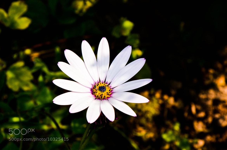 Photograph Flower by julian john on 500px