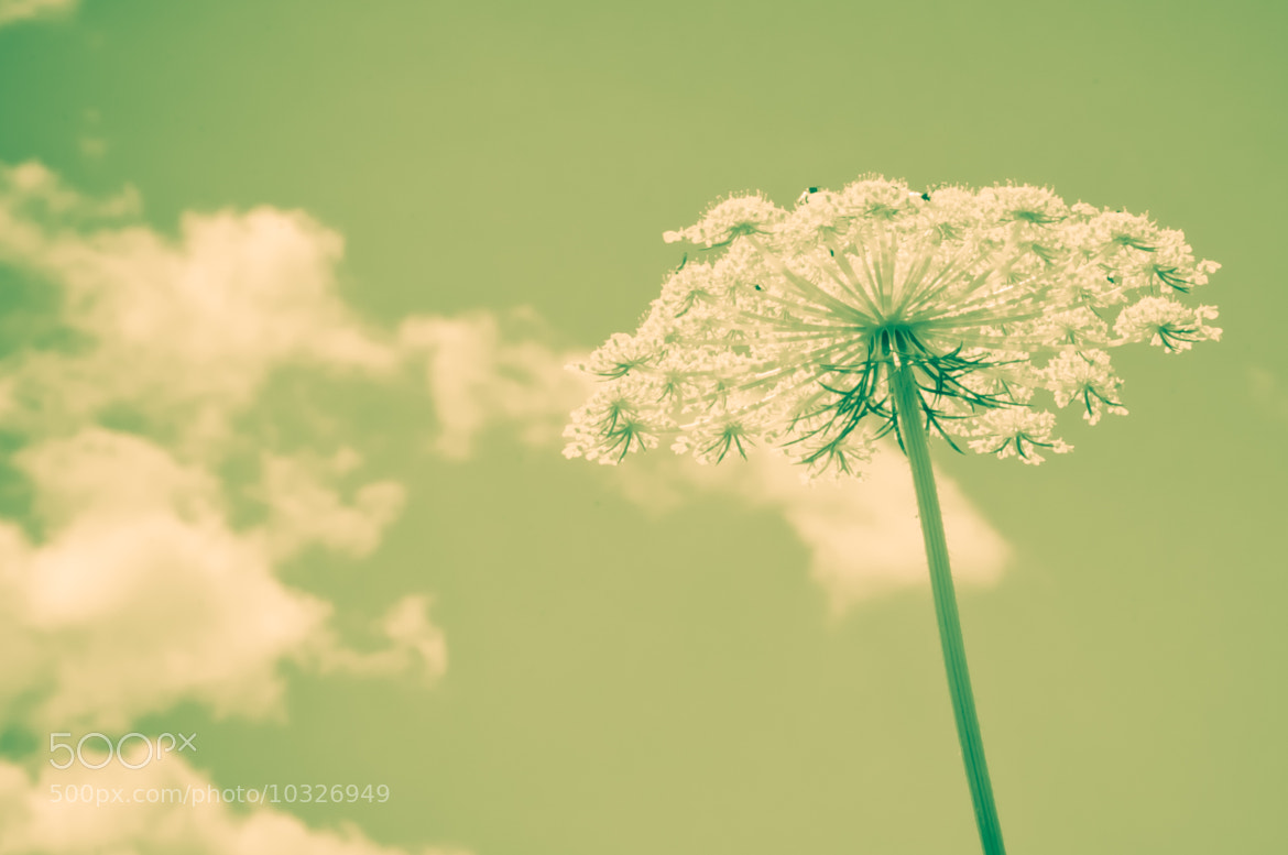 Photograph summer dream by Christoph Luce on 500px