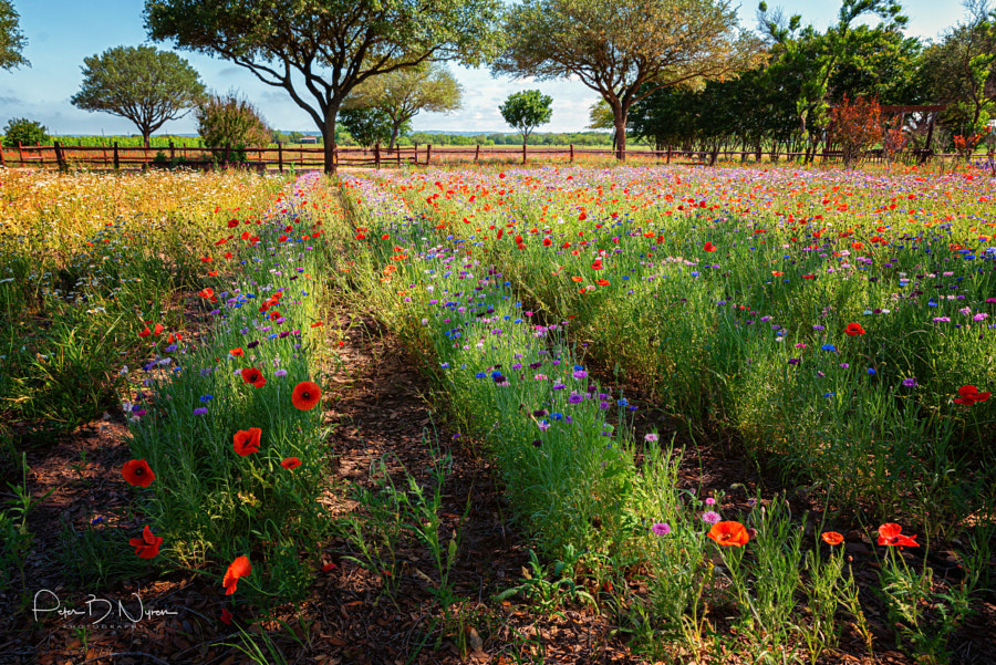 Texas Hillcountry by Peter B. Nyren on 500px.com