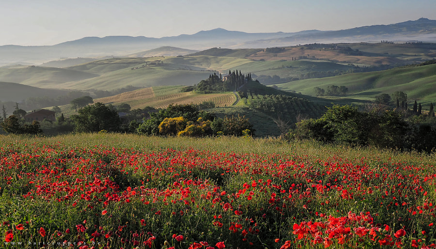 Tuscan poppies by Bart Ceuppens on 500px.com
