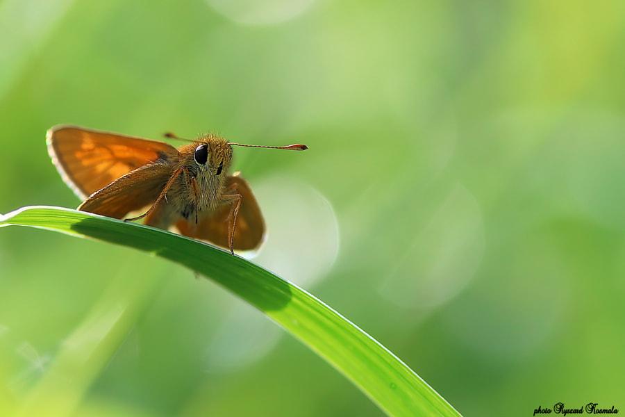 Little butterfly  by Ryszard Kosmala on 500px.com