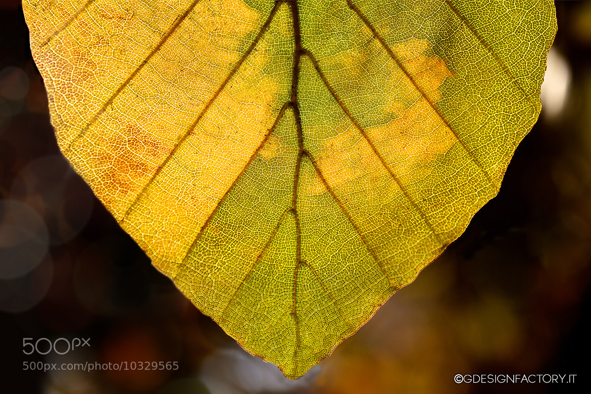Photograph Veins by Virginio Perissinotto on 500px