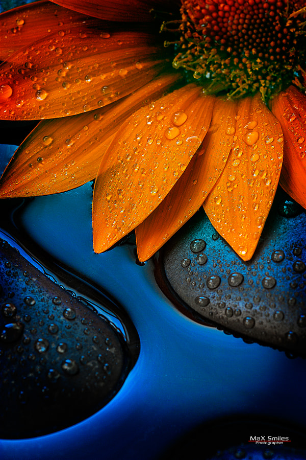 Flower 03 By Massimiliano Smiles On 500px