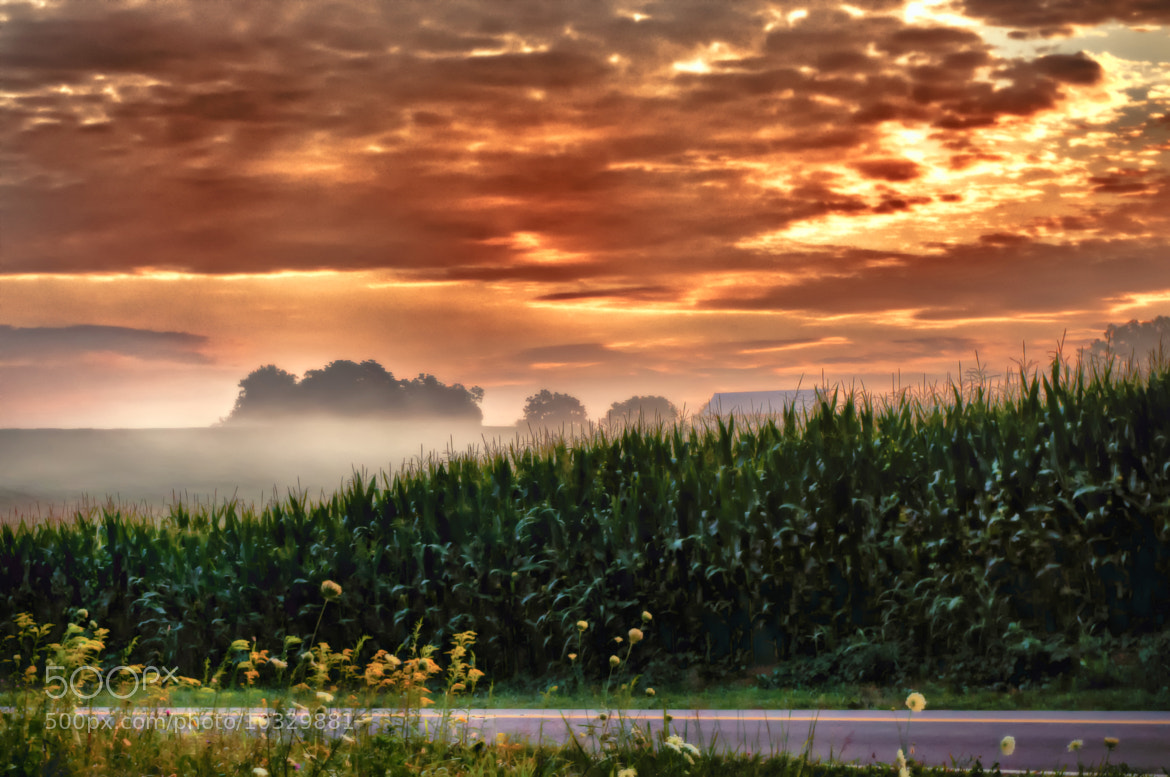 Photograph Amber Skies by Lori Coleman on 500px