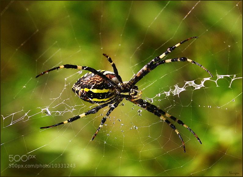 Photograph Spider... by Nurşen Biçer on 500px