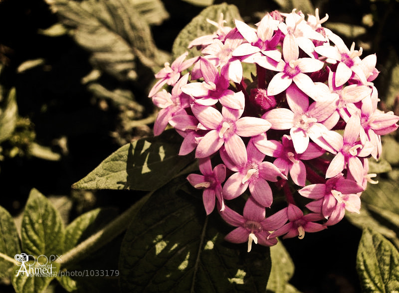 Photograph Circular Pink Flower by Ahmed Elmahalawy on 500px