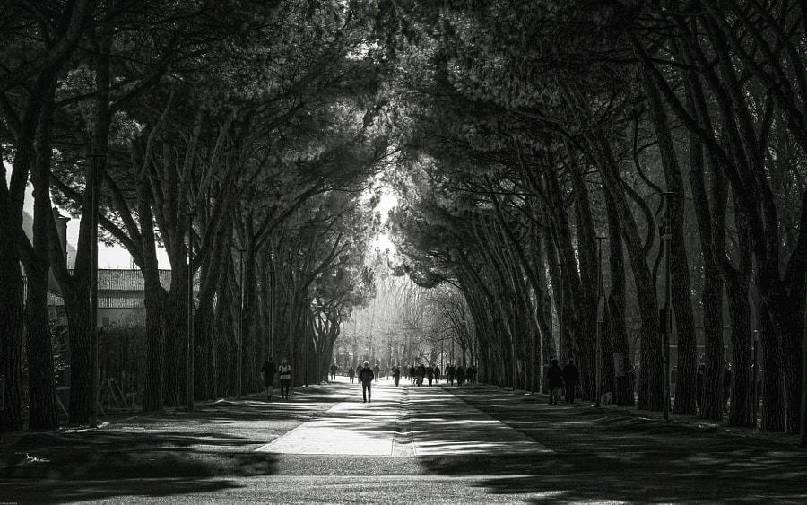 untitled by Attilio Molteni on 500px.com