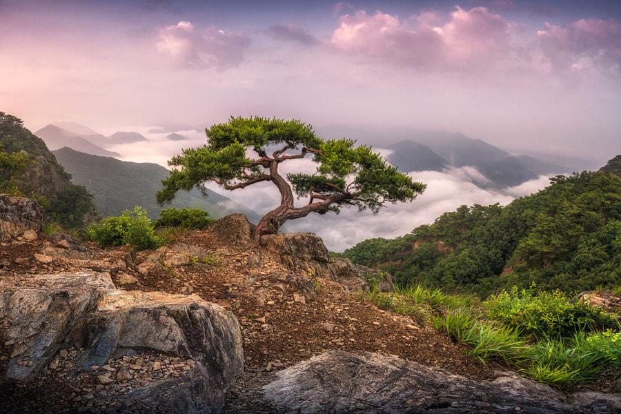 pine tree by kim jisung on 500px.com