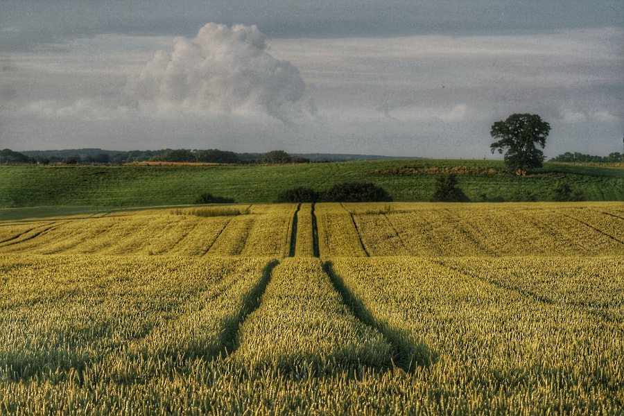 Landscape by Ludo P on 500px.com