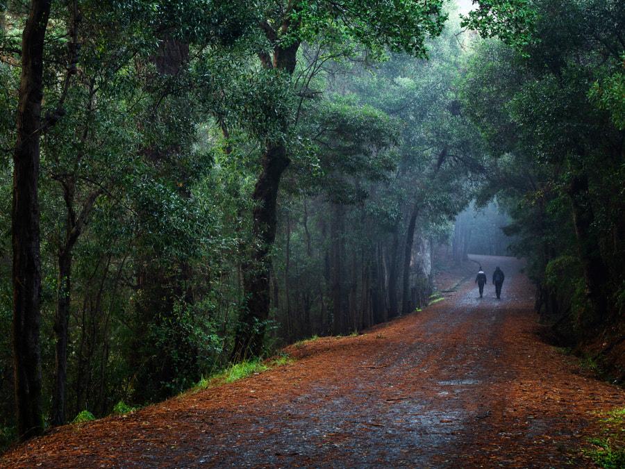 morning walk by Alfredo Santamaria on 500px.com