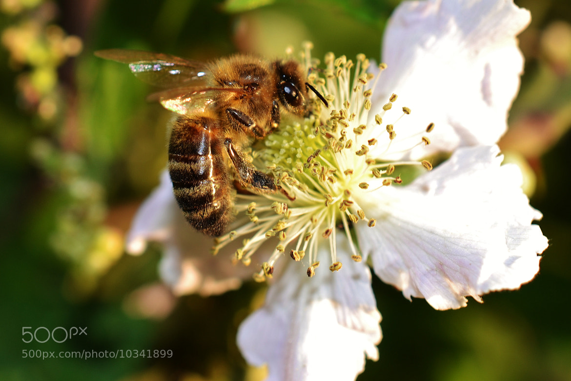 Photograph busy bee by emily prouse on 500px